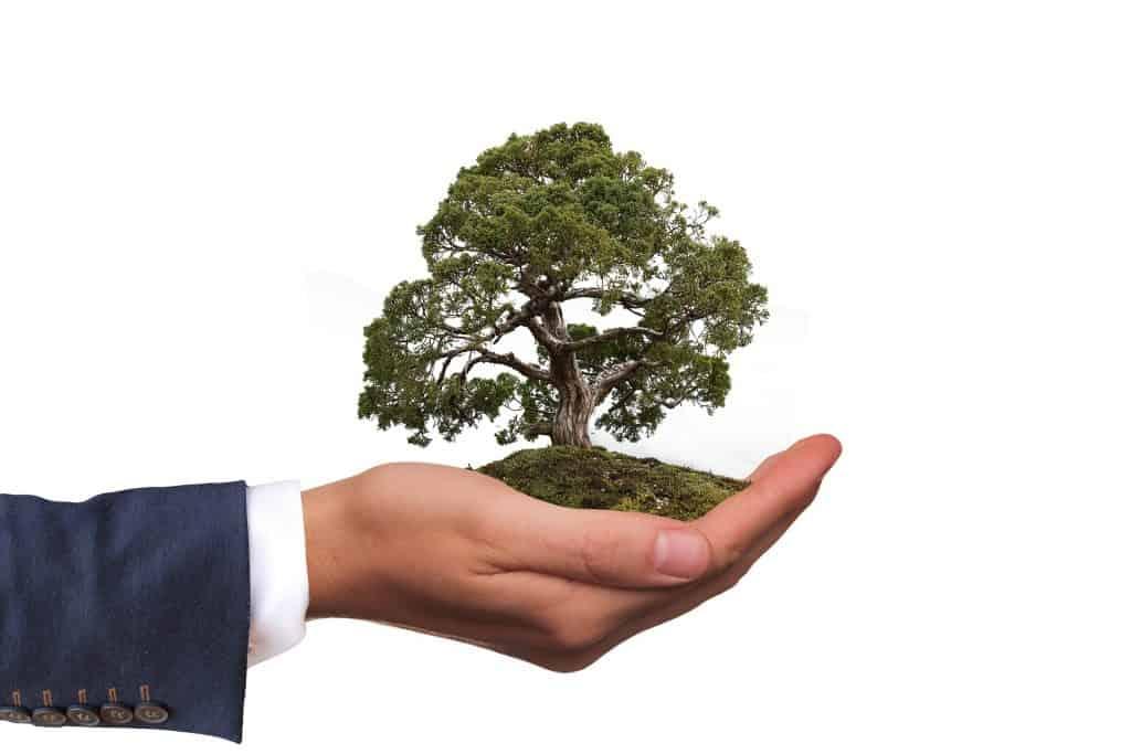Investir Dans L Economie Verte Est Ce Un Bon Plan